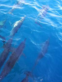 delfines - Brasil -