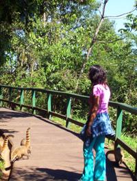 tambien los coatíes quieren ver Iguazú