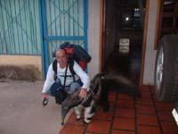 oso hormiguero en Roraima